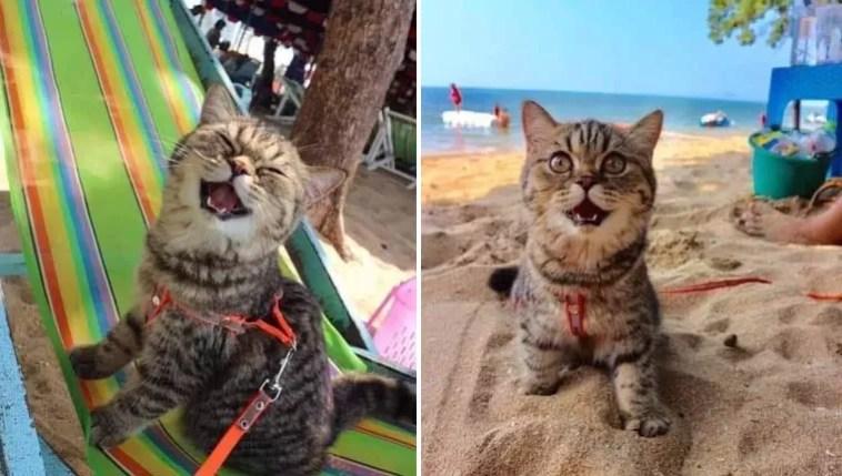 Gata foi à praia pela primeira vez e não consegue para de sorrir