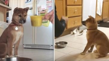 Cachorrinho dá pulos de alegria