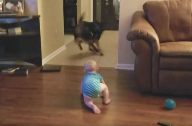 Cachorro e bebê se revezam em perseguição