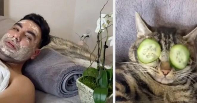 Casal viralizou no TikTok gato no spa