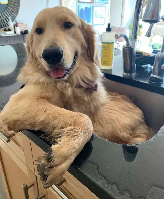 cão na pia