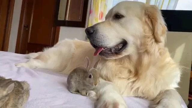 Coelhinhos pensam que cachorro mãe