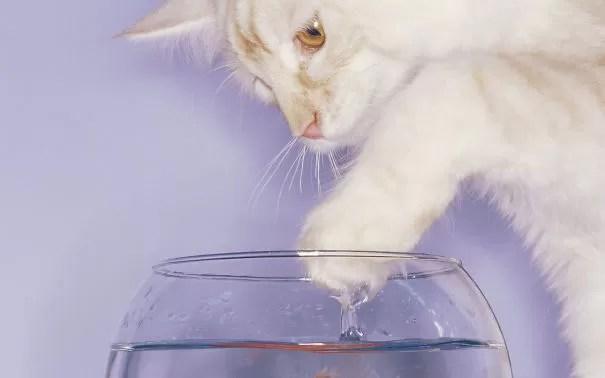 Esses gatinhos não foram avisados água