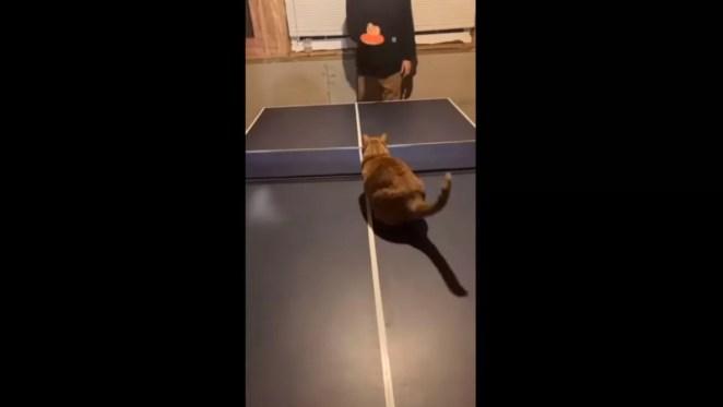 Gatinho vence o dono no ping pong