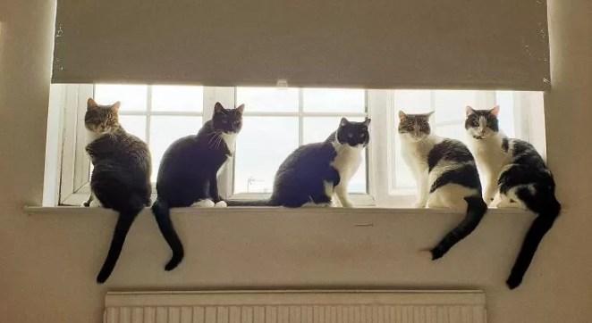 Homem nem tinha gatos, mas encontrou cinco