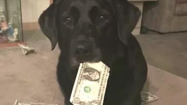 cachorro rouba dinheiro da bolsa da dona