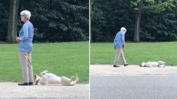 cachorro se joga no chão