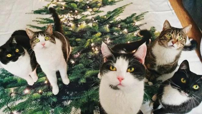 família de gatinhos
