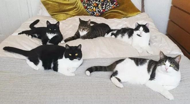 gatinhos em casa