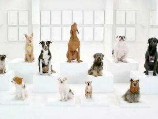 coro canino perros