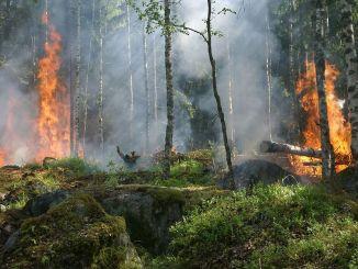 Cómo Evitar los Incendios Forestales en Verano