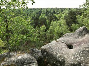 Randonnée dans les Gorges d'Apremont à Fontainebleau