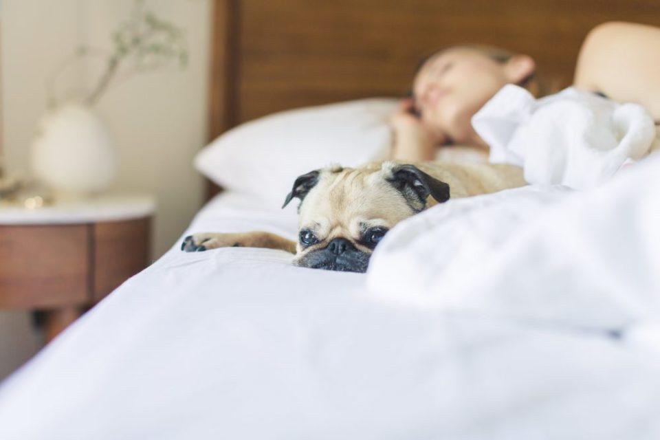 Las apneas del sueño impiden descanso