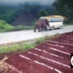 Un elefante ataca dos vehículos en China