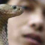 Un adolescente es picado por su cobra mascota y muere tras pedir auxilio por WhatsApp (FOTO)