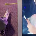 VÍDEO: La cacatúa viral que cantaba el tono de llamada de iPhone ve su propio vídeo y enloquece