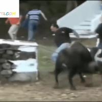 Cogidas de Toros -Festejos taurinos España-
