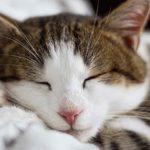 Una gatita francesa perdida da un paseo en tren antes de reencontrarse con su dueña