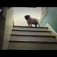 Perro bajando escalera mecanica