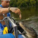 Hombre alimenta a cocodrilo como si fuera su mascota