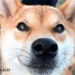 Beni, el perro que 'habla', conquista las redes sociales