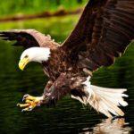 Aguilas vs Drones. INCREÍBLE VÍDEO