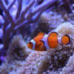 El mecanismo de cambio de sexo en los peces