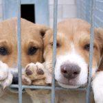 Prohíben la venta de cachorros de perros y gatos   En Reino Unido
