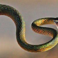 En Irlanda no hay serpientes. ¿Por qué?