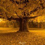 Los árboles que viven mil años