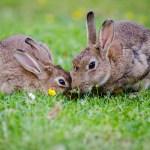 Francia aterrorizada por un asesino de conejos