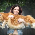 El gato más grande del mundo   Noticias Curiosas