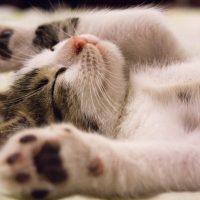 Curiosidades de los gatos que deberías conocer