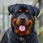 Los perros más peligrosos del mundo