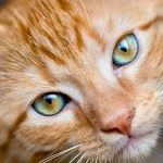 Mata a su marido por maltratar a su gato | Mundo loco