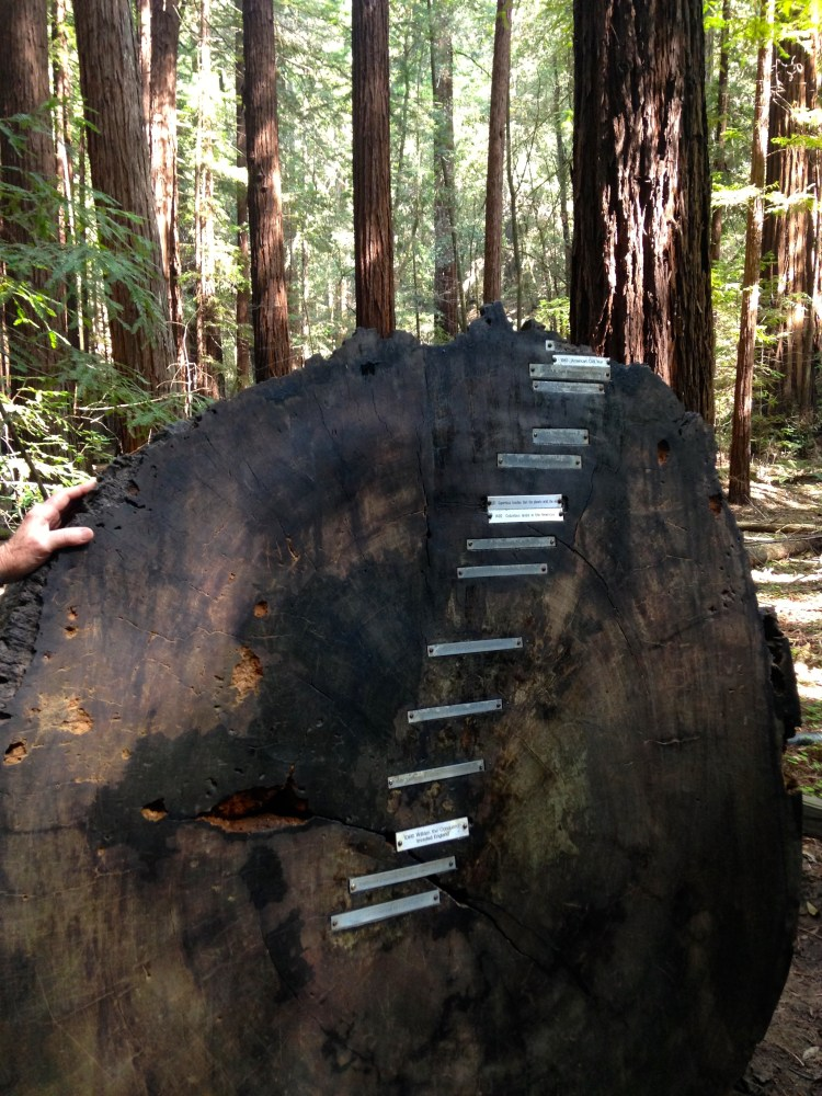 Mapping the age of a redwood