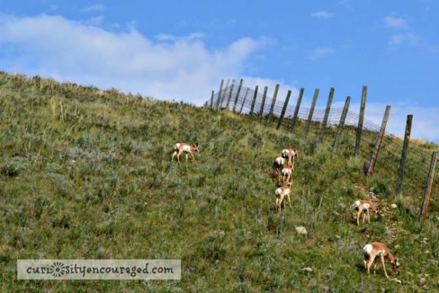 Travel with Kids to South Dakota, Visit Custer State Park, Family Travel, South Dakota