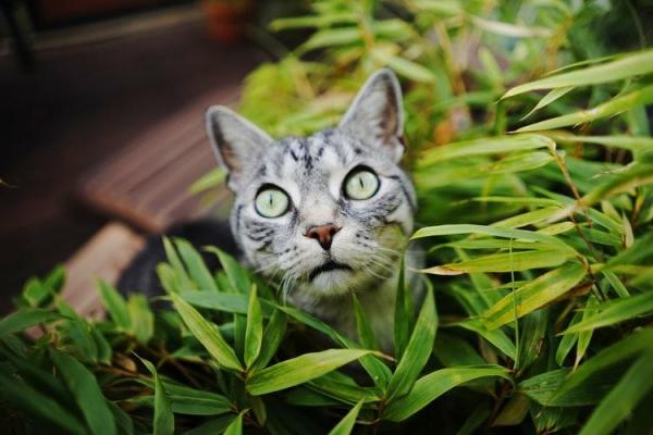 A Tabby cat sitting in a green leafy plant.