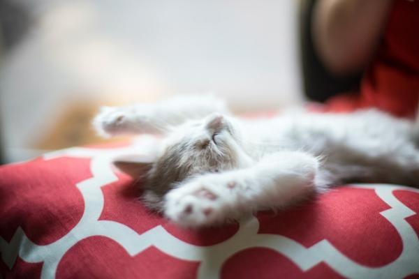 A kitten sleeps on his back with paws over the head
