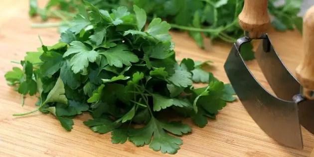 Calcium rich Italian flat-leaf parsley on a chopping board