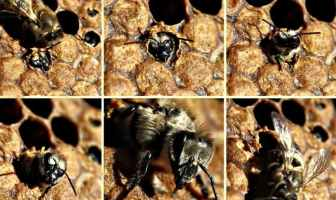 Types of bees.