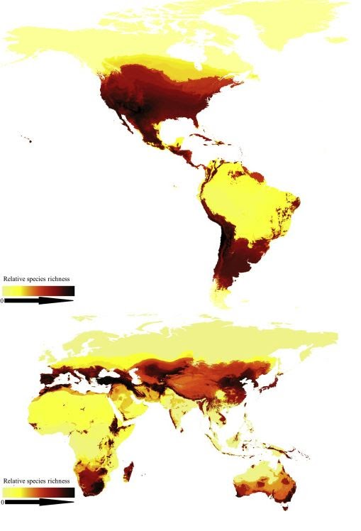 First map of bee species around the world.