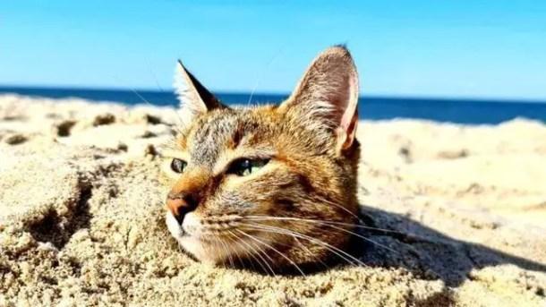Nala plays on the sand of a beach.