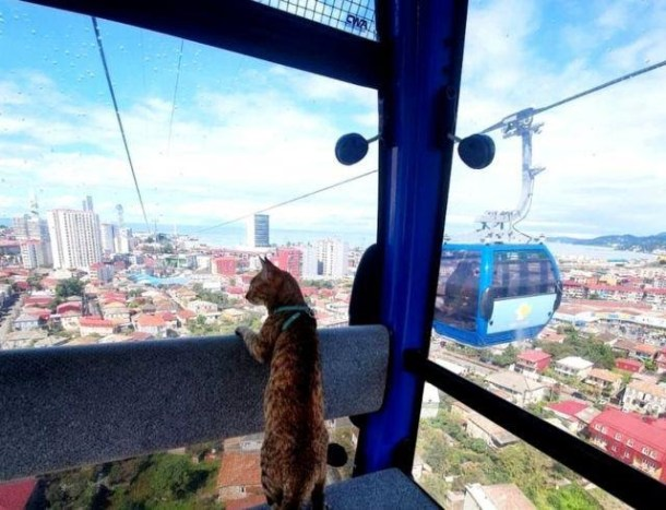 The kitty watches the window in a cable car in Georgia.
