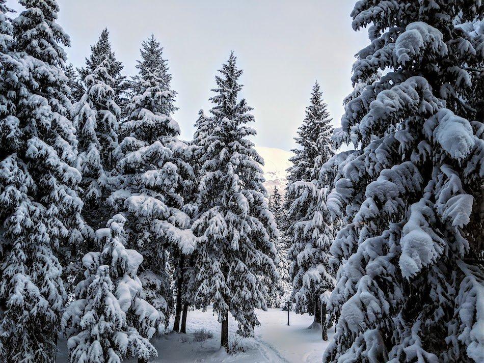 Snowy Forest Ecosystem Alaska