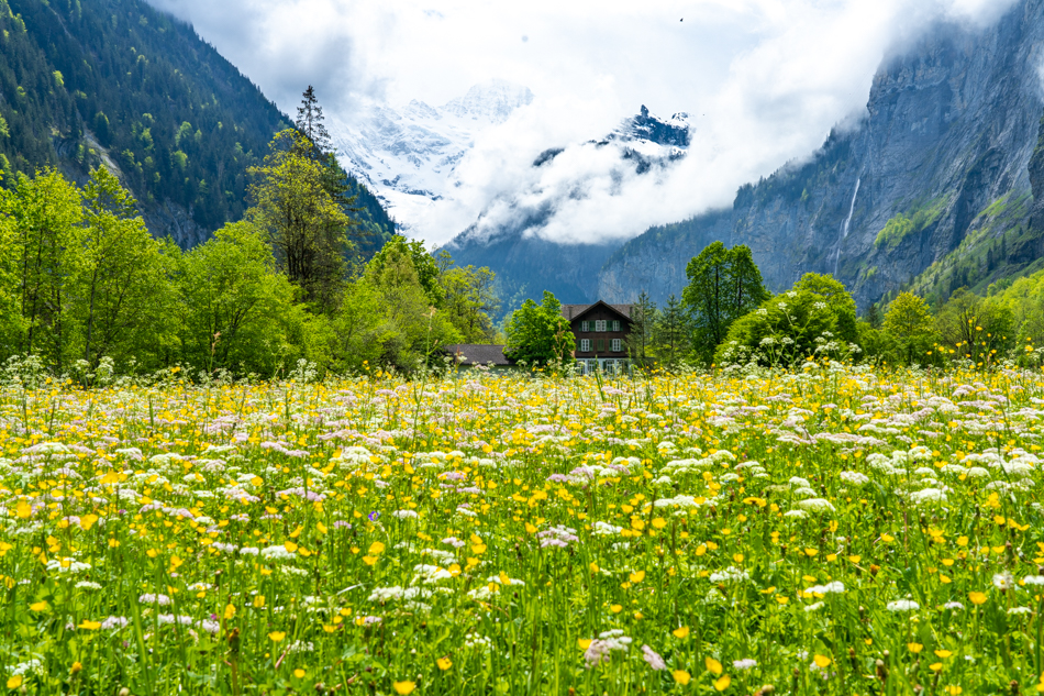 Wildflowers and Switzerland cabin with mountains Lauterbrunnen