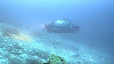 Image Credit: Nekton Mission / YouTube.