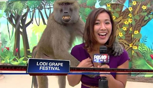 best-news-bloopers-2013-smLL