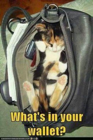 cat-humor5