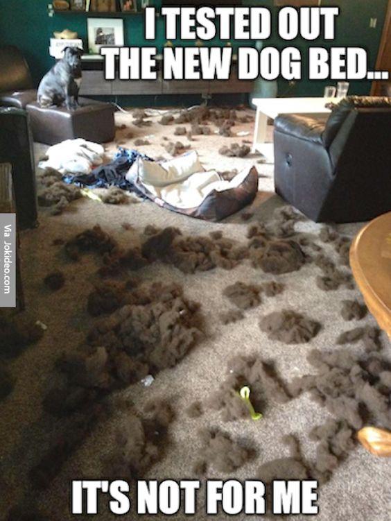 dog-humor-3